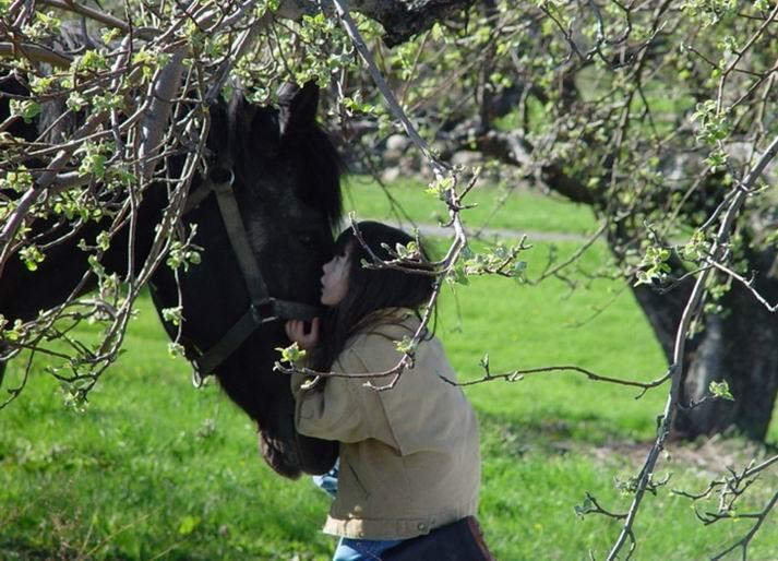 http://www.ljplus.ru/img/a/r/arteire/horse_and_girl.jpg