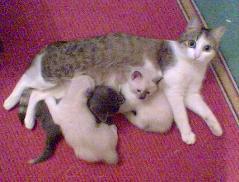Kittyz