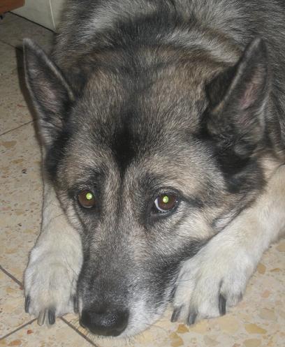 http://www.ljplus.ru/img/c/r/crazy_zoologist/jessie3.JPG