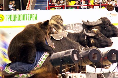 бычьи медвежьи