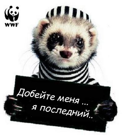 http://www.ljplus.ru/img/h/a/haiduk/WWF.jpg
