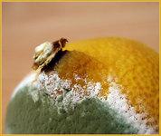 объектов оранжевая плесень на хлебе некоторых картинах происходило