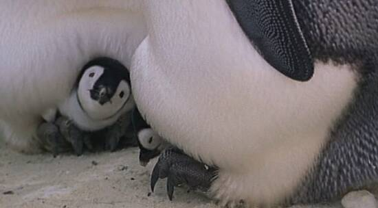 Как трахаются пингвины фото 424-445