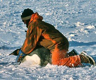 Как трахаются пингвины фото 424-488