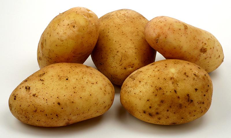 В Новгородской области будет хозяйство по выращиванию картофеля