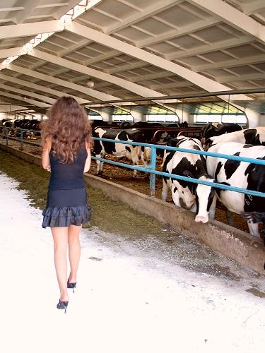 девочка и коровы