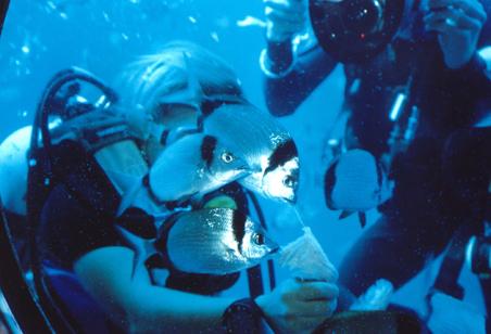 подводная лодка садко кипр цена