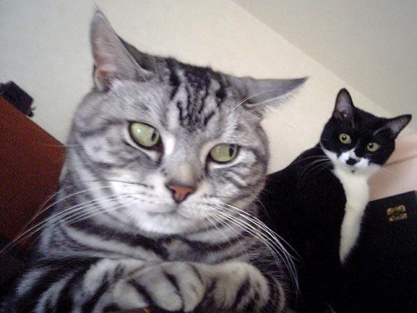 http://www.ljplus.ru/img2/s/o/soundcoder/zorkiy-cats.jpg