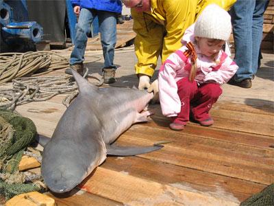 Самца полярной акулы длинной более полутора метров и весом почти в 40...