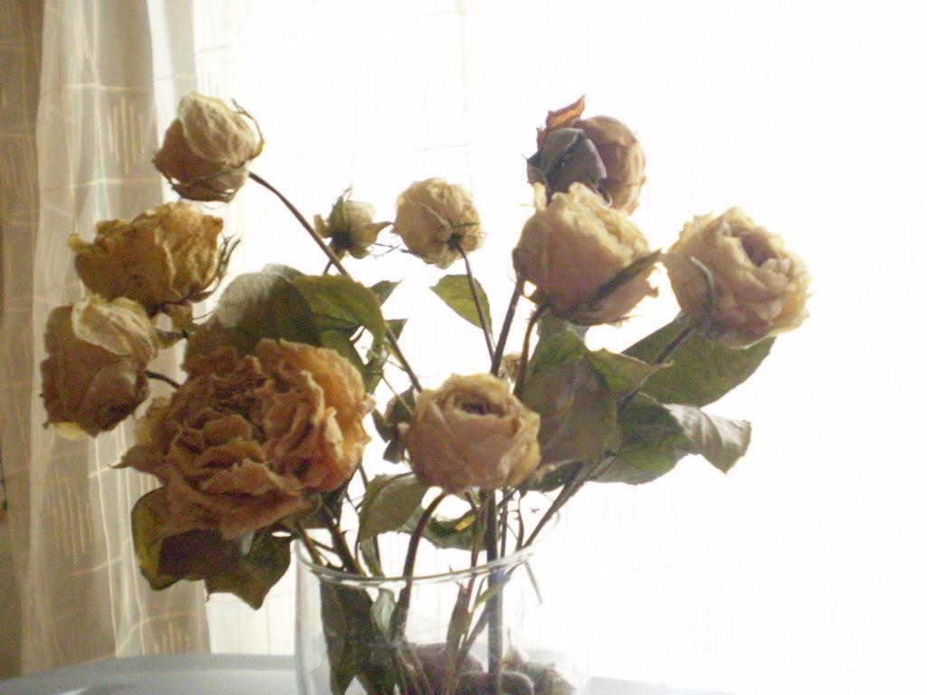 Засушенные цветы как называются
