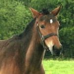 Происшествия: Житомирские фермеры морили голодом племенных лошадей. ФОТО. ВИДЕО