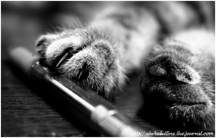 http://www.ljplus.ru/img3/m/v/mv_foto/cat_work_03_07_jj.jpg