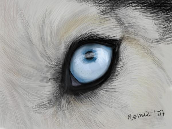 У всех хаски голубые глаза.  Они прирождённые охотники, может и в тебе он.