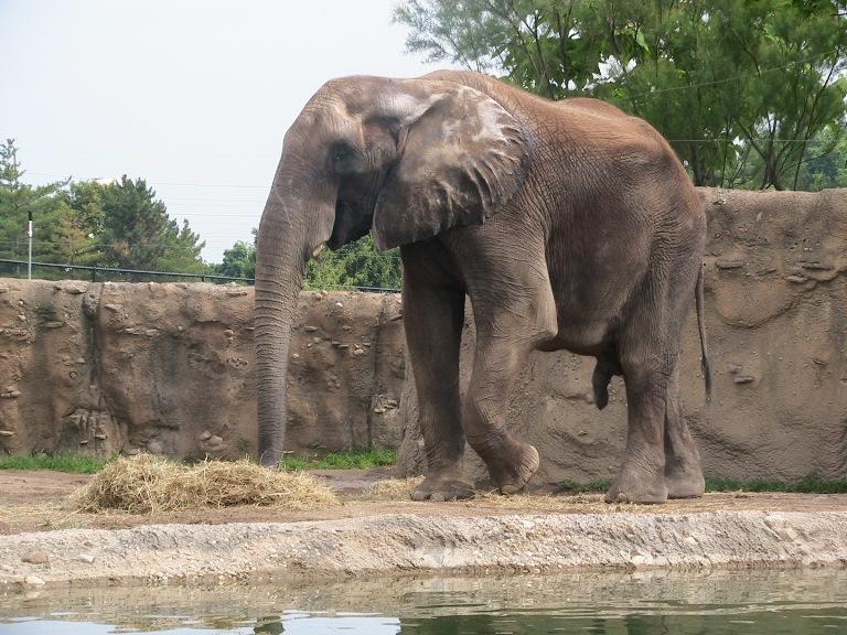 Хуй у слона фото 35-491