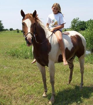 чудо-конь