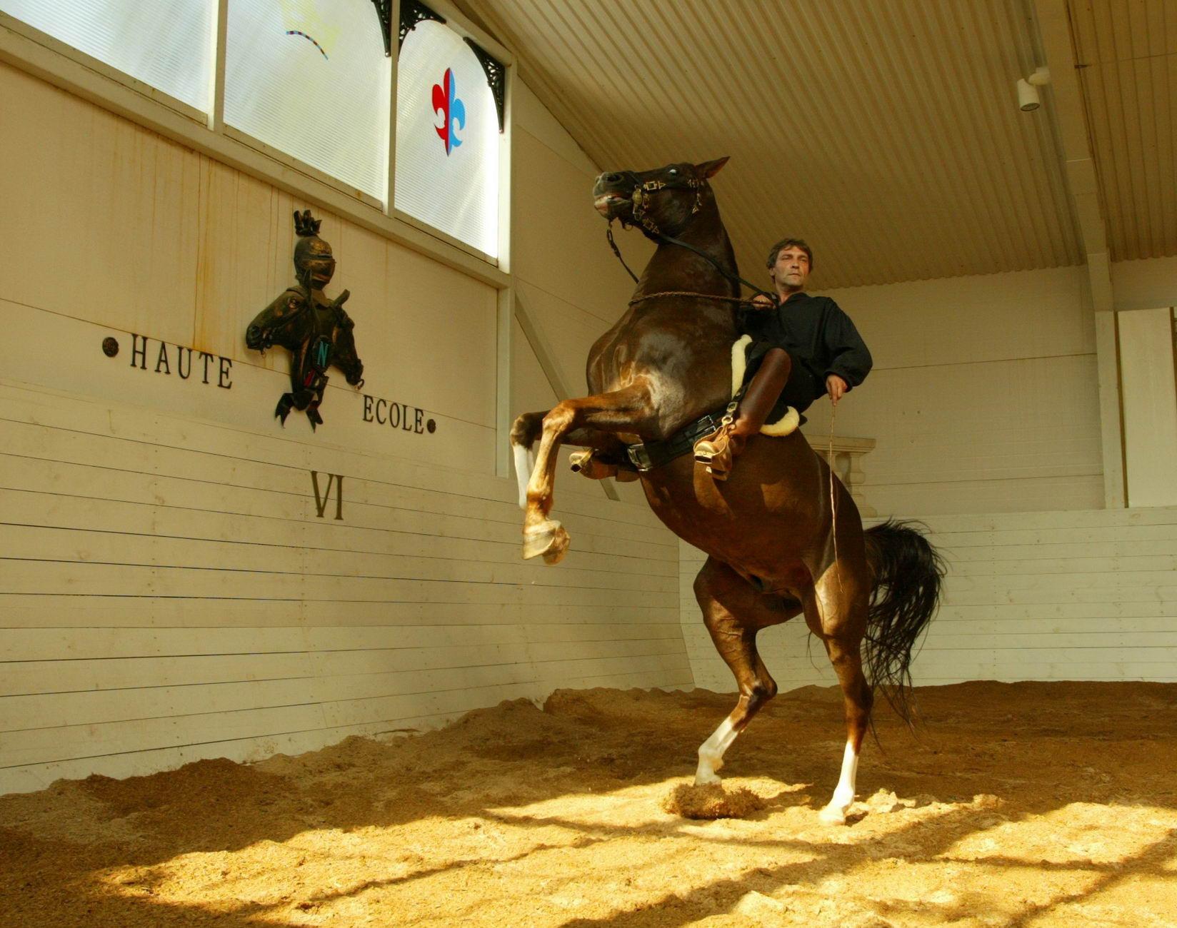 Картинки по запросу Александр Невзоров со своей лошадью