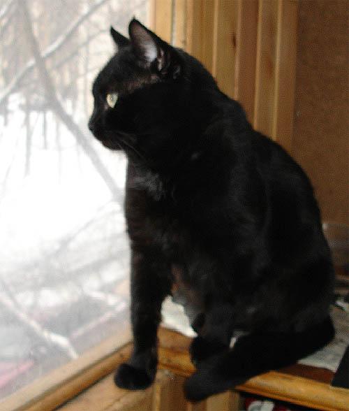 Нашелся кот черный