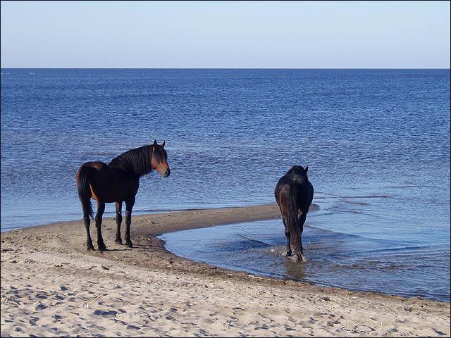 http://www.ljplus.ru/img3/s/k/skyjet/lake_horses.jpg