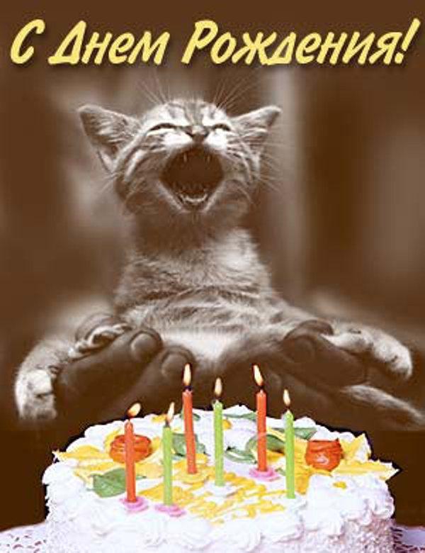 картинки с днём рождения с кошками прикольные