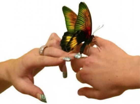 Бабочки... бабочки!