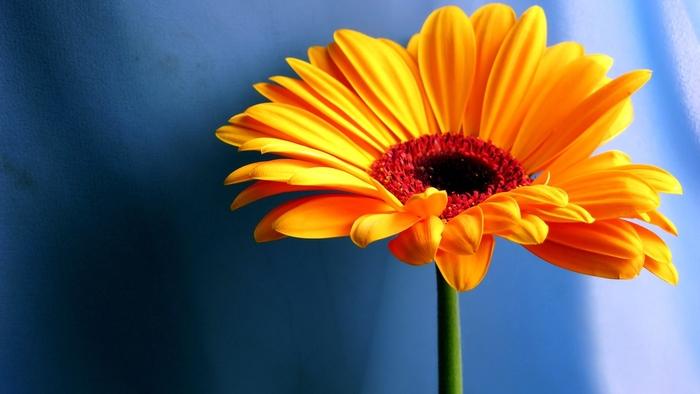 http://www.ljplus.ru/img4/1/z/1zzz/yellow-contrast-flower-wallpapers_9224_1920x1080.jpg