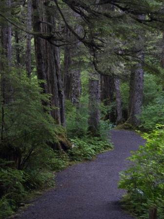 Тропинка в лесу Les-Alyaska