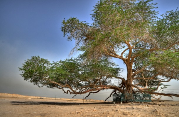 Необычные места, дома и деревья на Земле TREE-OF-LIFE-bahrein