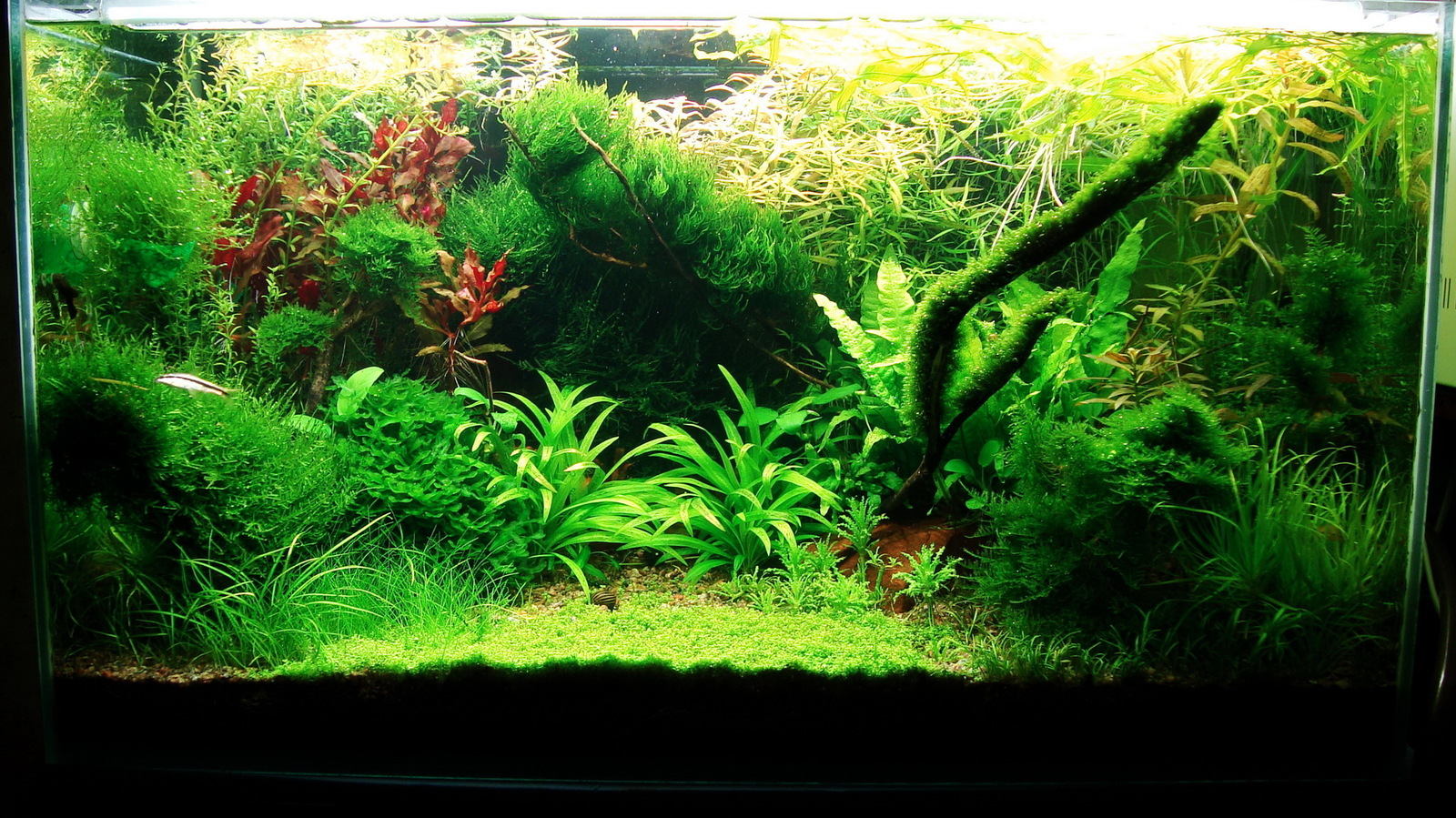 Домашние аквариумы фото 7