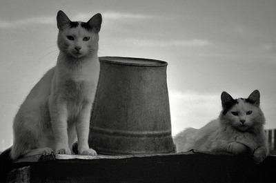 Кошачьи приключения)