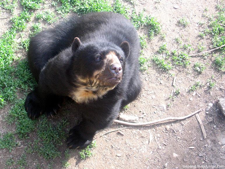 Это тоже такой медведь.