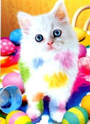 лови белого пушистого котёнка: