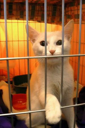 Свободу тиграм!!! Тигры в клетках не живут!!!