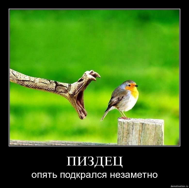 ПТИЧКА - о чом думает птичка покакать сейчас или.... - демотиватор на деМатом.ком.