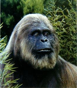 -                         Gigantopithecus Giganteus