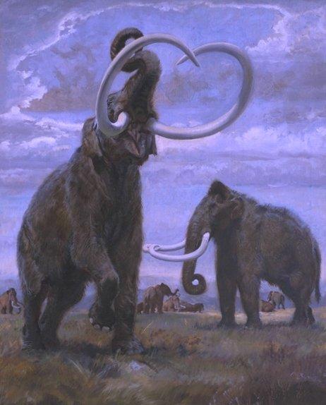 http://www.ljplus.ru/img4/c/r/crazy_zoologist/mammuthus_trogontherii.jpg