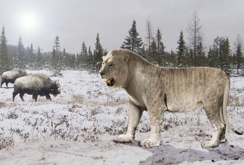 Nanh Sư tử Hang động hóa thạch - Cave Lion Fossil Fang