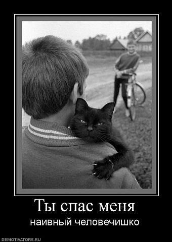 http://www.ljplus.ru/img4/d/o/dostavimvse/ty-spas-menya.jpg