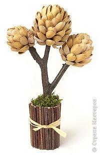 Фисташковое деревце