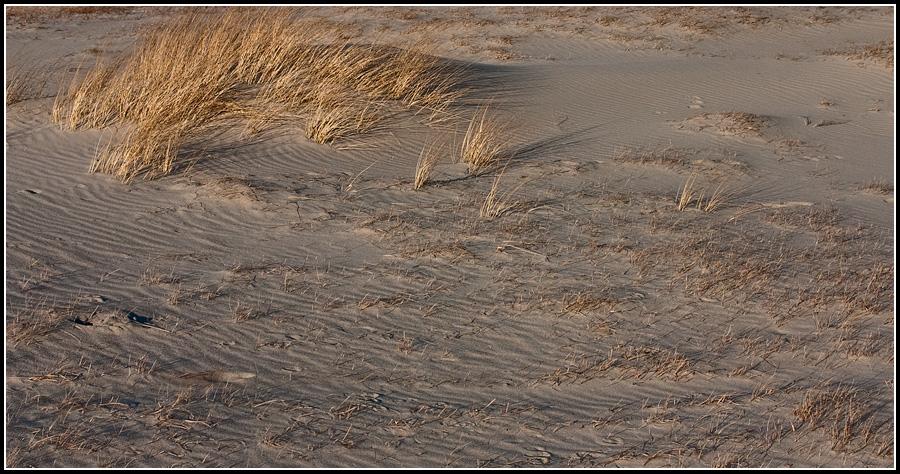 Пески Балтийской Косы