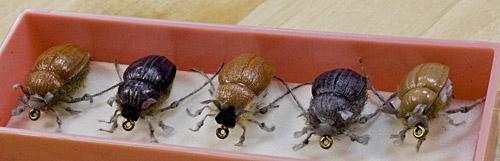 как хранить майского жука для рыбалки