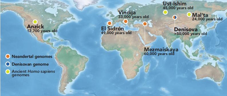 http://www.ljplus.ru/img4/g/e/geky/Stone-Age-genomics.png