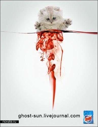 Растворение котёнка