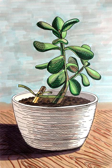 Как нарисовать денежное дерево поэтапно