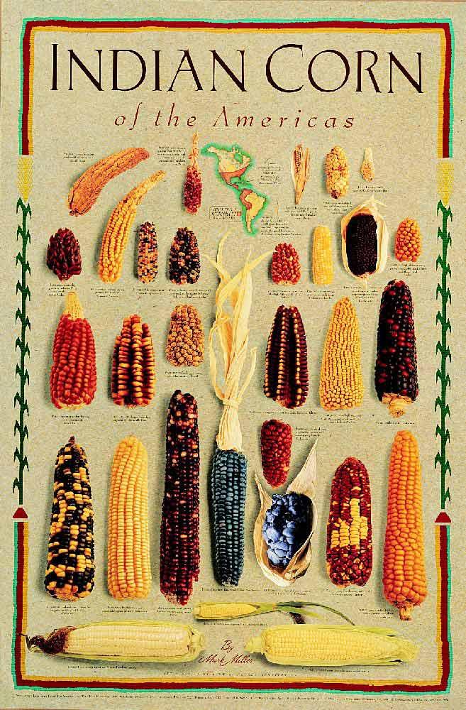 Разноцветная кукуруза Hexell