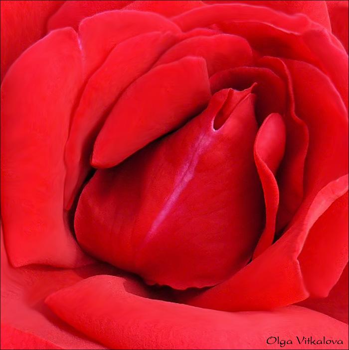 цветы эротические фото