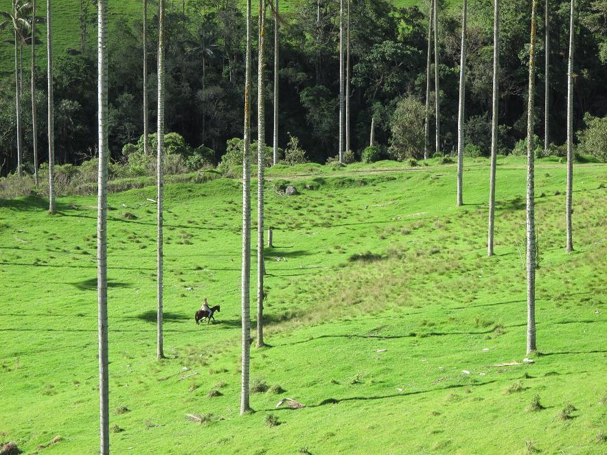 Долина Кокора (Valle de Cocora) в Колумбии