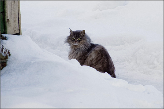 Усадьба Кусково. Кошка