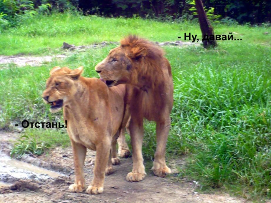 muzhchina-lev-seksualnost