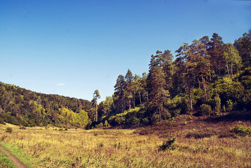Сосновые леса Ширяевского оврага, Самарская лука, Россия