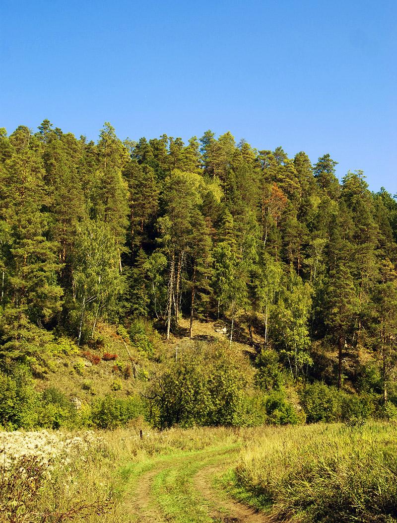 сосновый лес на горе, Самарская лука, 513.33 КБ